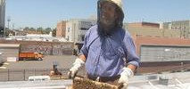 Bees Take to the Roof at Oakland's Blue Bottle
