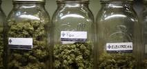 More Medical Marijuana Mulled in SF