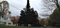 Rockefeller Center Tree Cut Down