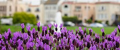 Jardines en Palace of Fine Arts