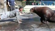 49ers' Coach vs. Walrus For Push-up