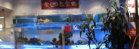 DOH Chronicles: Koi Palace's Dirty Fish Tanks Are Freaking Everyone Out