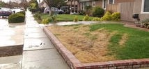 Poisoned Lawns Reported in San Jose