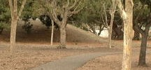Teen Jogger Sexually Assaulted