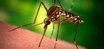 Human Case of West Nile in Contra Costa County