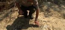 Dinosaur Tracks Found at TX Lake