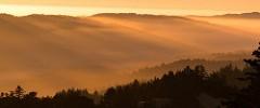 Golden Marin Sunset