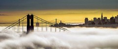 Fog City Color