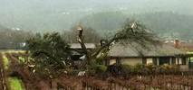 Large Oak Tree Crashes Into Saint Helena Home