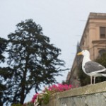 Bird on Alcatraz Island