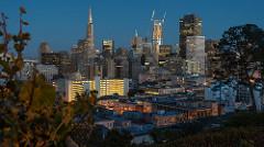Downtown San Francisco through the trees.....