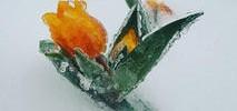 PHOTOS: DC Cherry Blossoms Left Frozen by Late-Season Storm