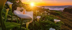 Sunset over Cala Lilies
