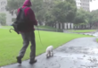 Afternoon Palate Cleanser: Very Berkeley Man Makes Video Tutorial For Walking Cats On-Leash
