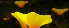 SF Botanical Garden at Golden Gate Park - 040217 - 11