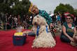This Komondor Took Top Honors At 10th Duboce Park Dogfest