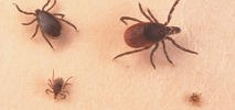 How to Protect Yourself From Surge in Lyme Disease Ticks