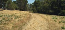New Paved Path to Replace Stanford's 'Scary Path'