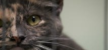 Priced Out Bay Area Shelter Sends Final Plea to Save 45 Cats