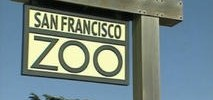 SF Police Searching for Couple Who Abandoned Child Near Zoo