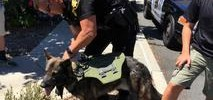 K-9 Teams Show Off Skills to Raise Money for Police Dogs