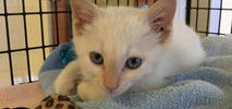 Stowaway Kitten Found on Truck During Delivery to Shelter