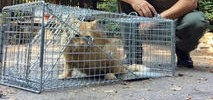 Feral Cats Colony Being Removed From Santa Cruz County Lot