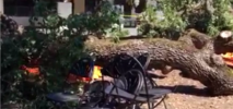 Tree Branch Falls, Lands on Picnic Crowd at Menlo College