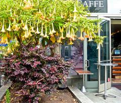 Union Square, trumpet flowers, cafe,