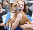 Fleeing Hurricane Irma, 152 Shelter Pets Seek Bay Area Homes