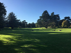 A moment of serenity in a busy week (Golden Gate Park on a Saturday afternoon).