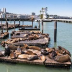 San Francisco Sea Lions-5