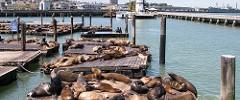 San Francisco Sea Lions-5