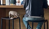 puppy dogs in restaurants so San Francisco