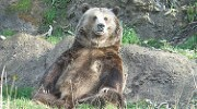 Wow, that was a real bear
